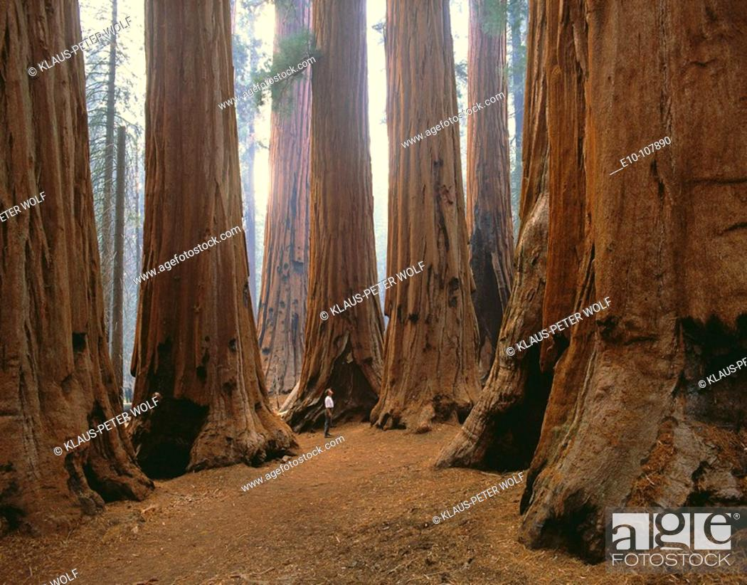 Stock Photo: 'The Senate' in Sequoia National Park. California, USA.