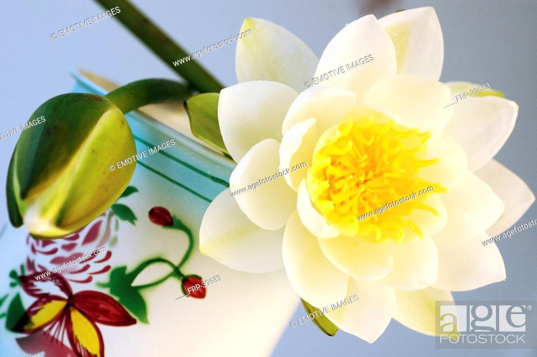 Stock Photo: White water lilies decorated in a tea container.
