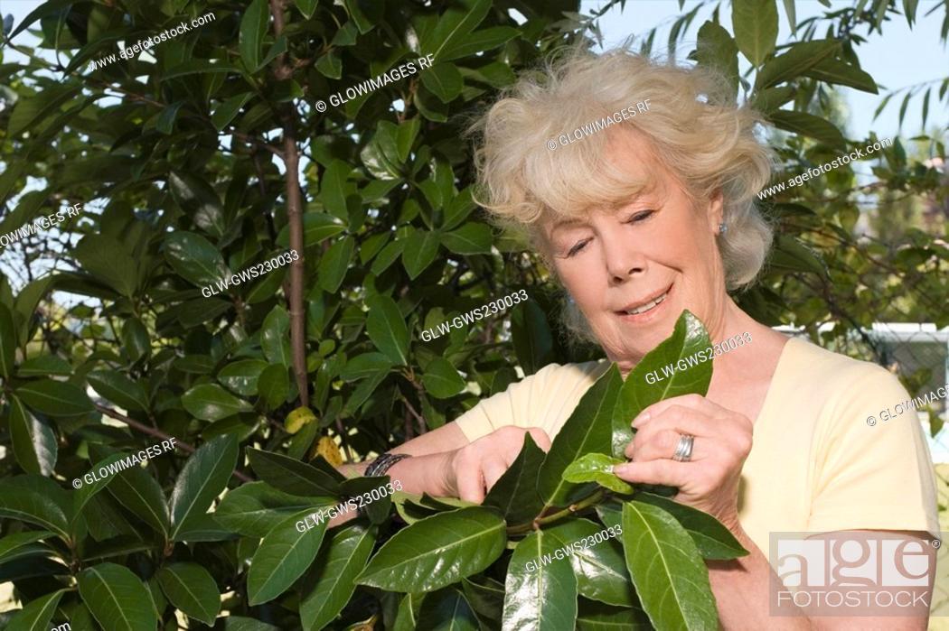 Stock Photo: Close-up of a senior woman gardening.