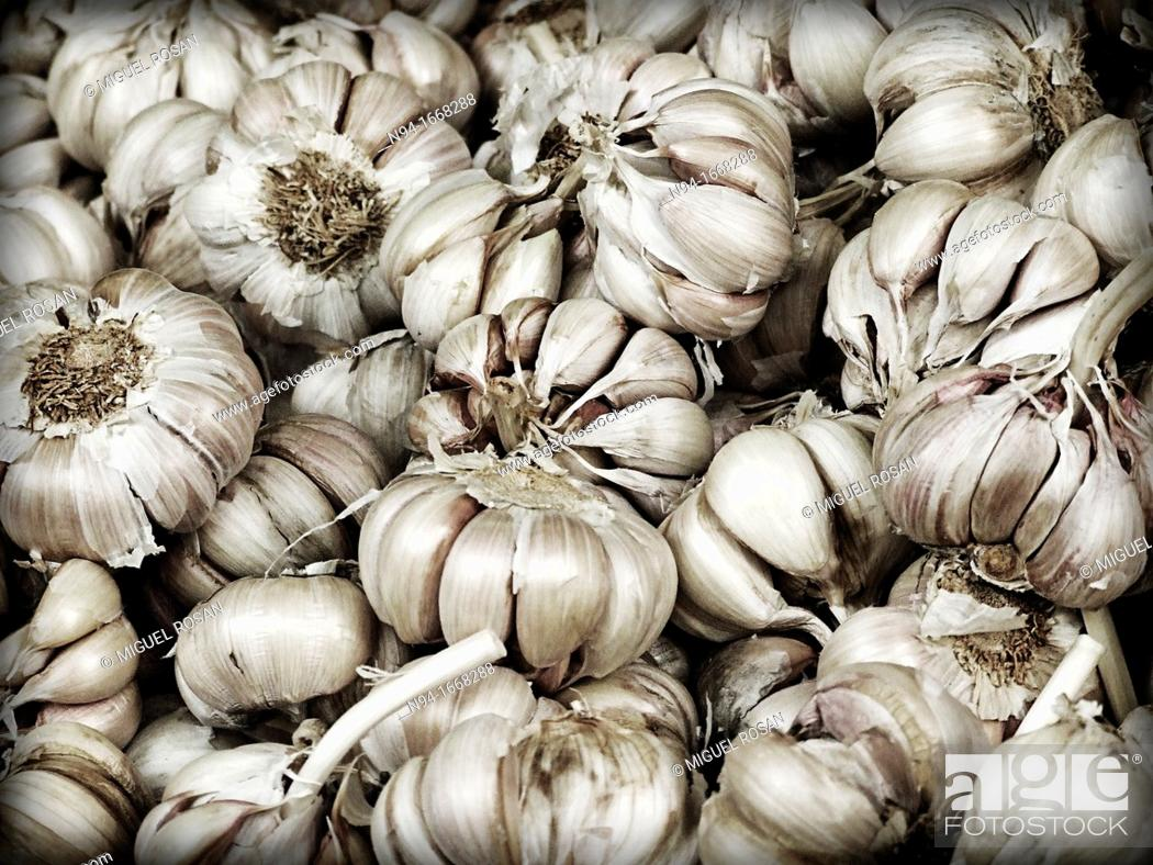 Stock Photo: Still head and dry garlic cloves.