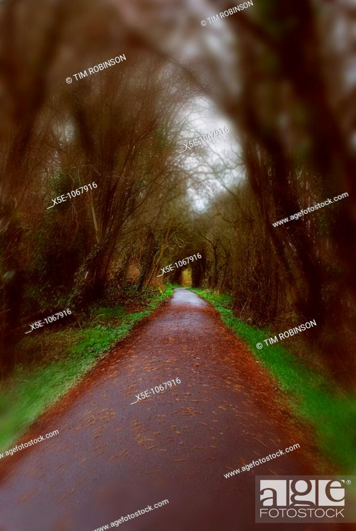 Stock Photo: Pathway in countryside with autumnal fallen leaves.