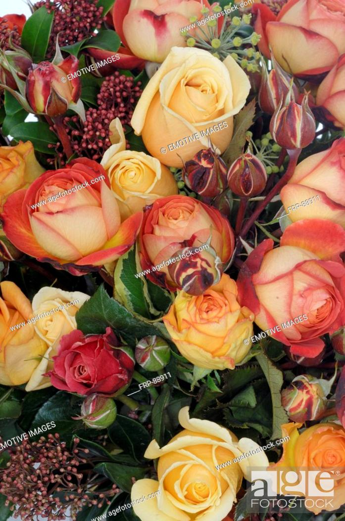 Stock Photo: Roses from the open ground.