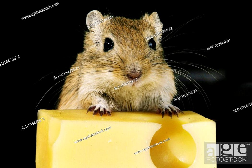 Stock Photo: animals, black, beige, alfred.