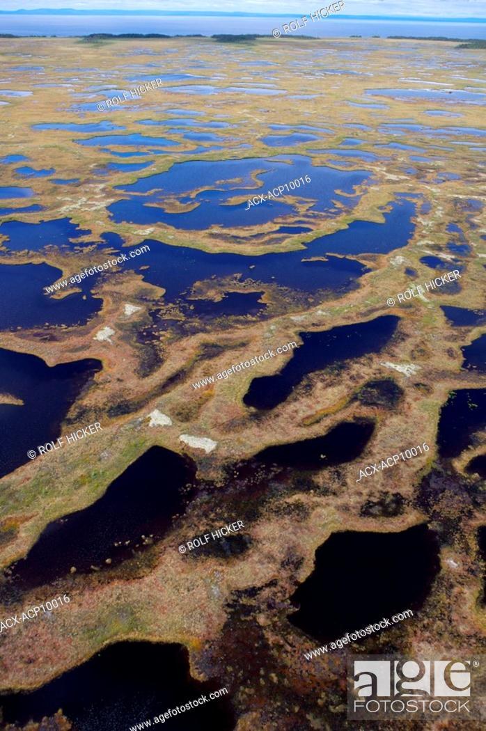 Stock Photo: Aerial view of the marshland bogs in the wilderness of Southern Labrador, Newfoundland & Labrador, Canada.