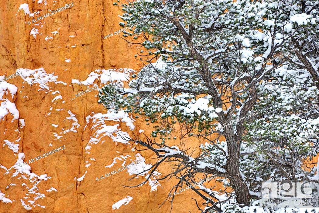 Stock Photo: Trees dusted with snow in Red Canyon Dixie National Forest Utah.