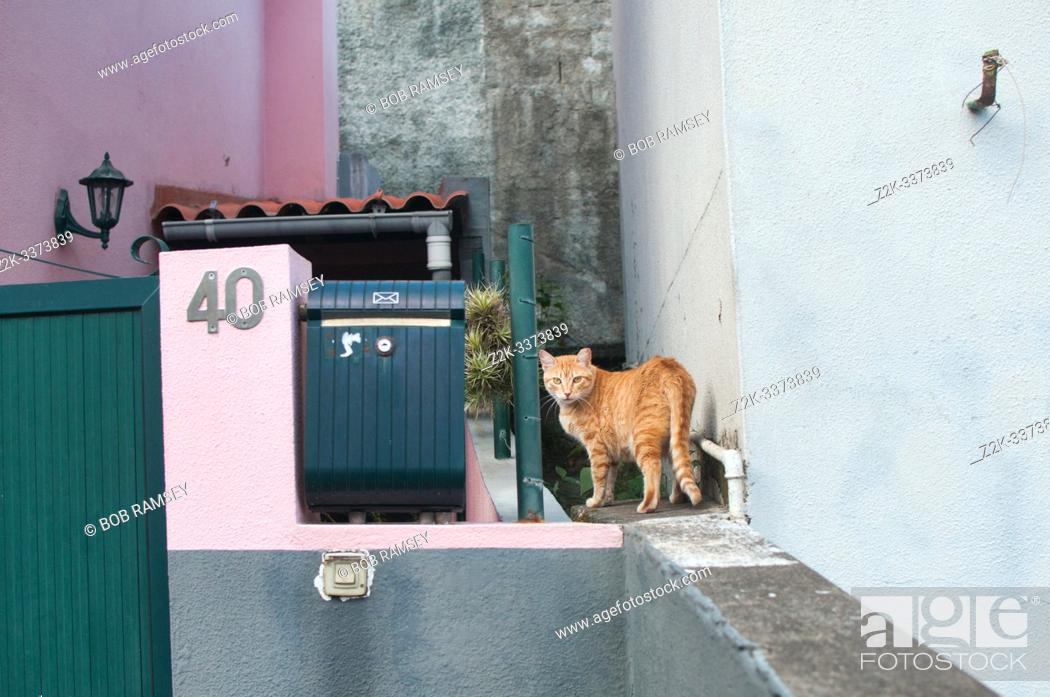 Stock Photo: Red cat on a wall.