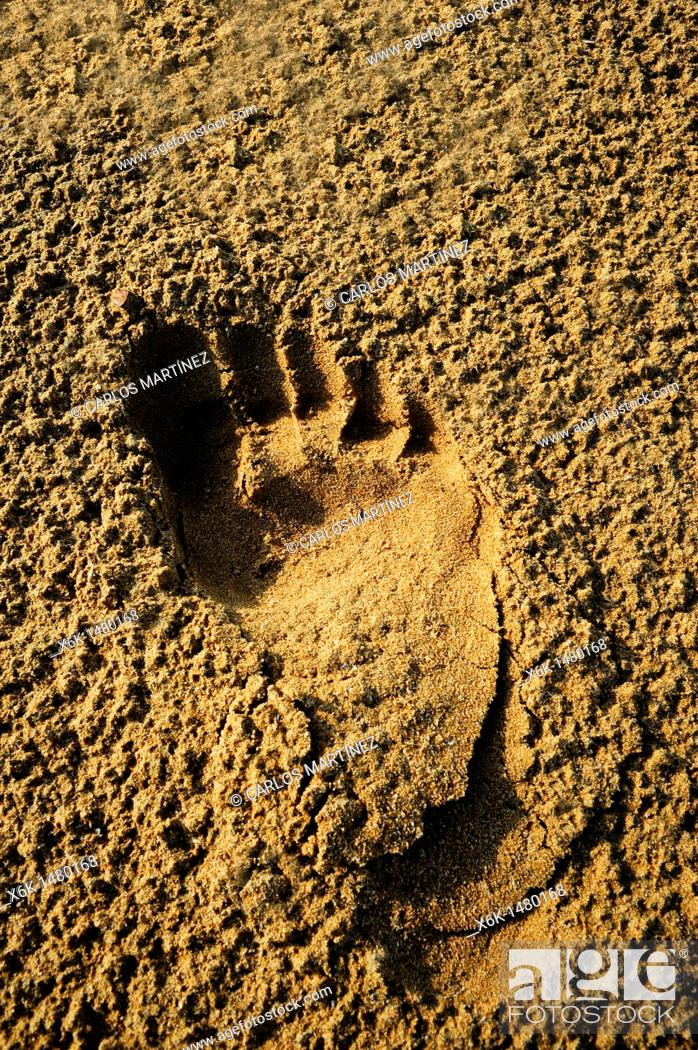 Stock Photo: Footprint barefoot in the sand on the beach, Cubelles, Barcelona province, Catalunya, Spain.