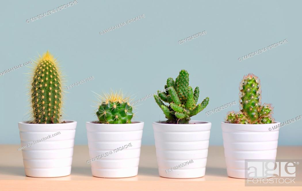 Stock Photo: Different types of cactus in pots.