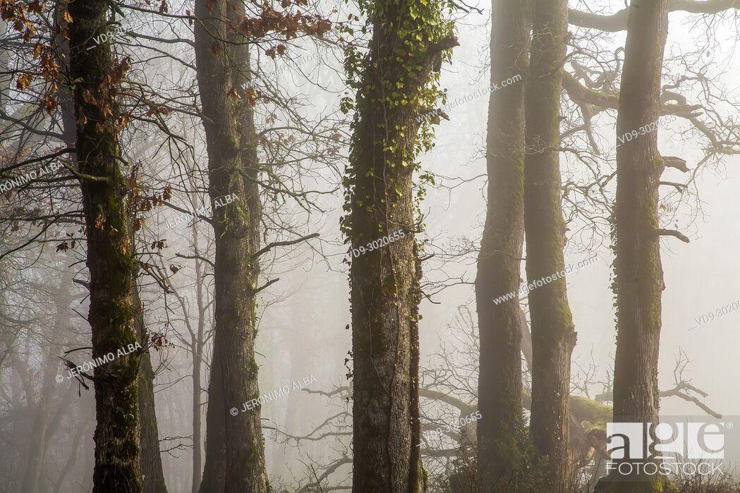Stock Photo: Oak wood forest. Le Gers Department, New Aquitaine, Midi Pyerenees. France Europe wood. Le Gers Department, New Aquitaine, Midi Pyerenees.