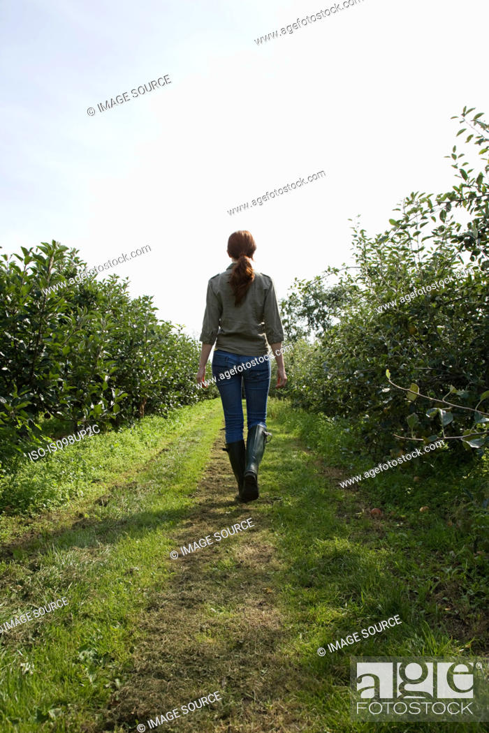 Stock Photo: Young woman walking in field, rear view.