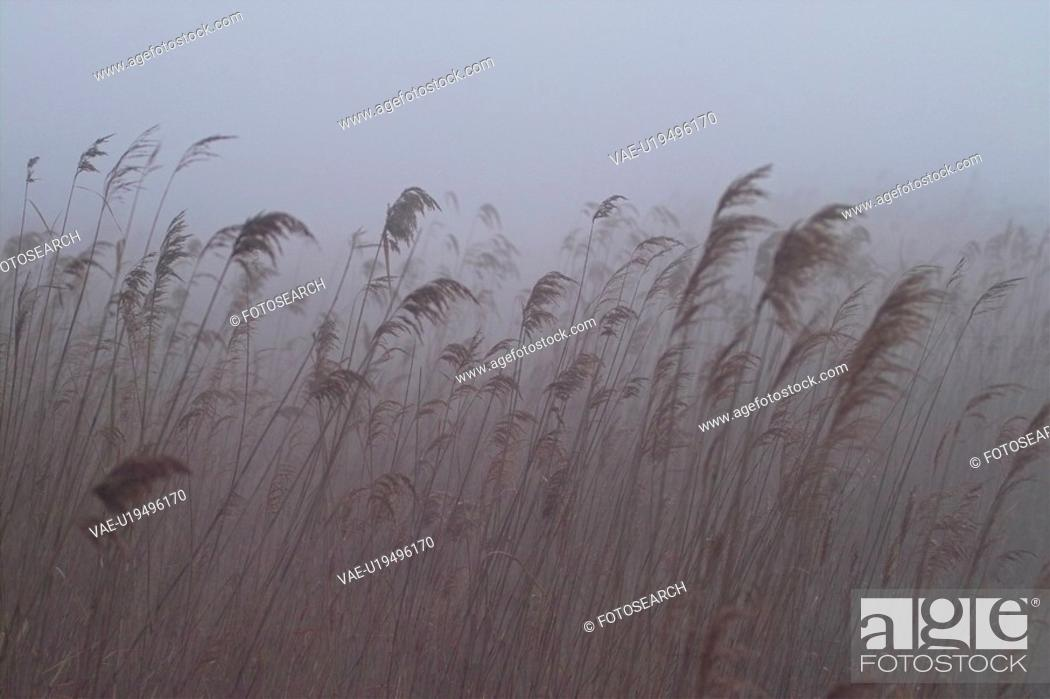 Stock Photo: plants, nature, eulalia, plant, scenery, grass, field.