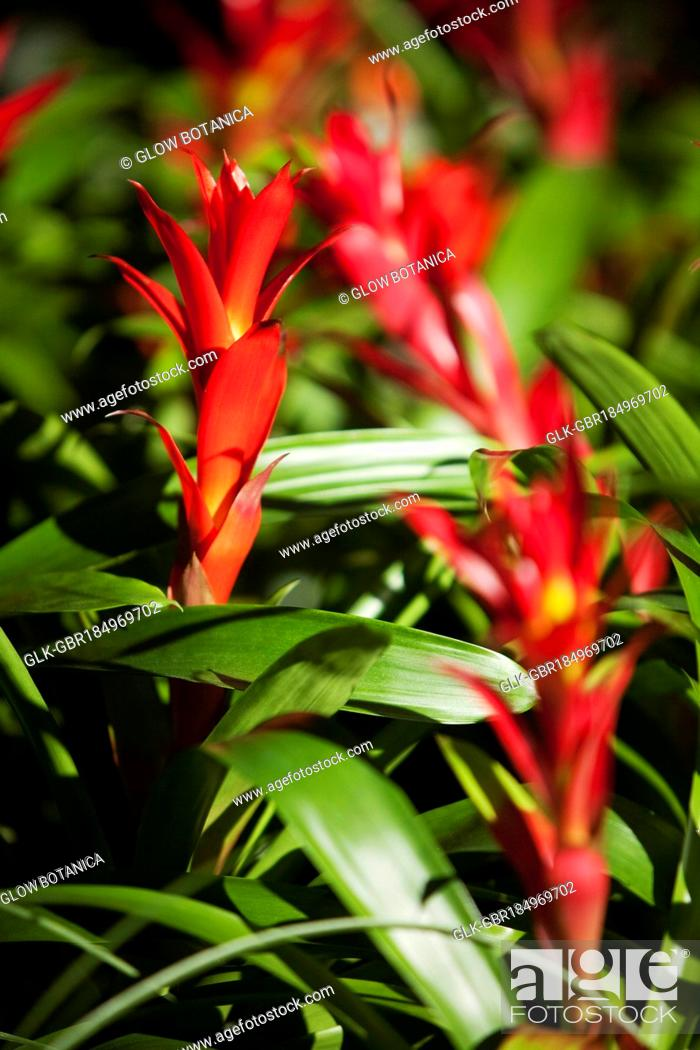 Stock Photo: Close-up of red flowers.