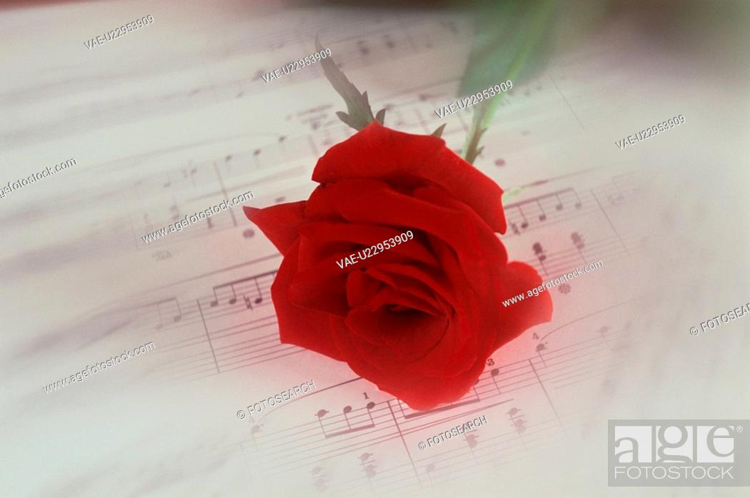 Stock Photo: Red Rose On Sheet Music.