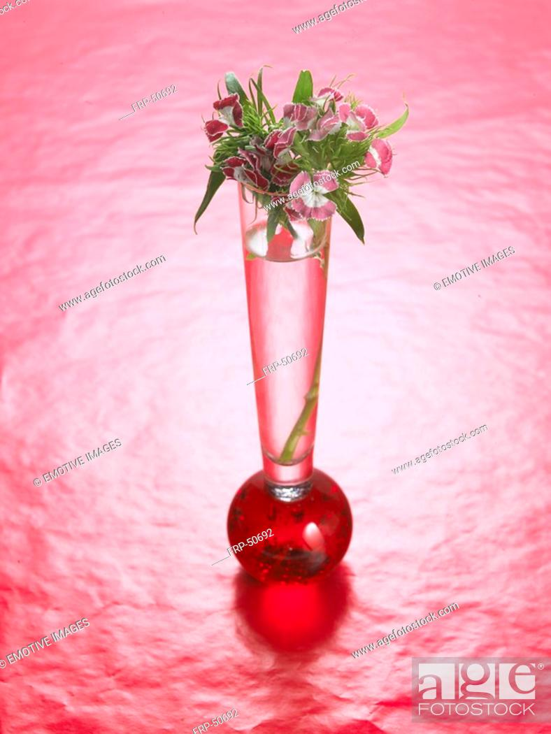 Stock Photo: Sweet william in a red glass vase.