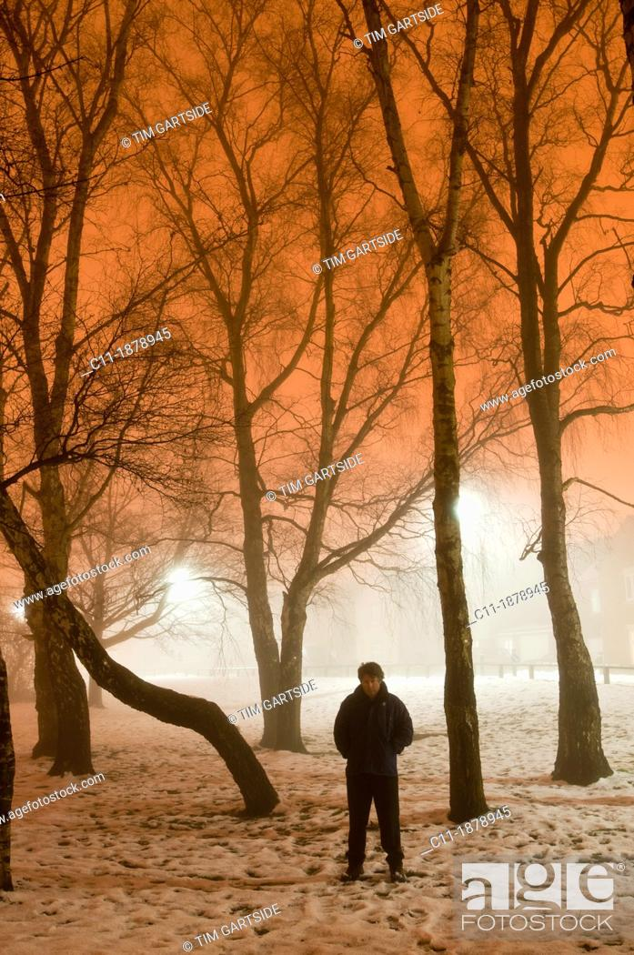 Stock Photo: winter fog with trees at night, Biggin Hill, Kent, England, UK, Europe.