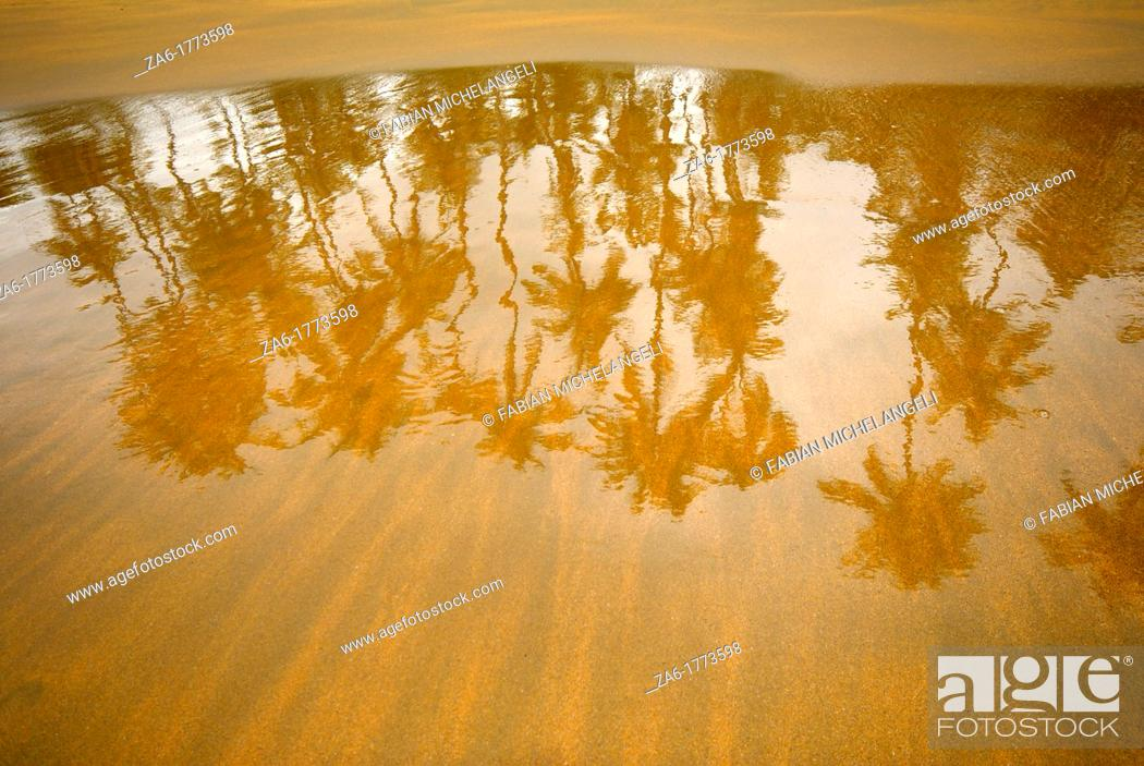 Stock Photo: Palm trees reflected in the wet sand in the beach, Venezuela.