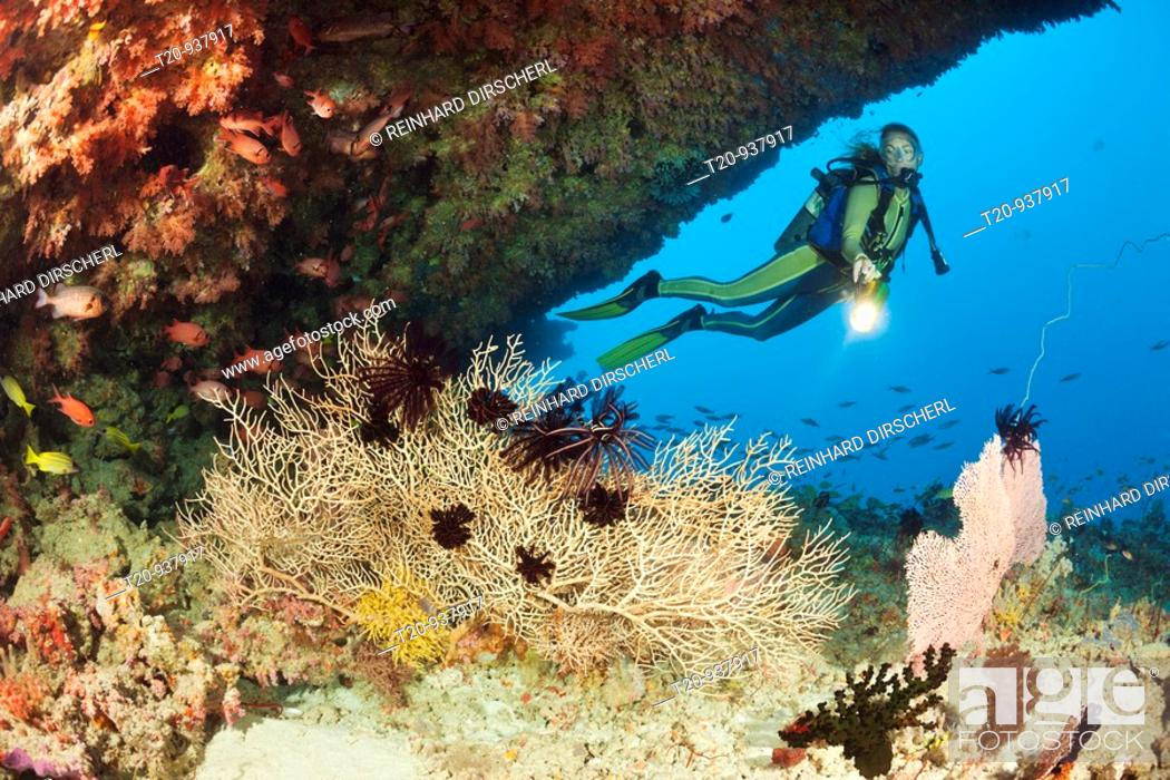 Stock Photo: Overhang with Sea Fan and Diver, Himendhoo Thila, North Ari Atoll, Maldives.