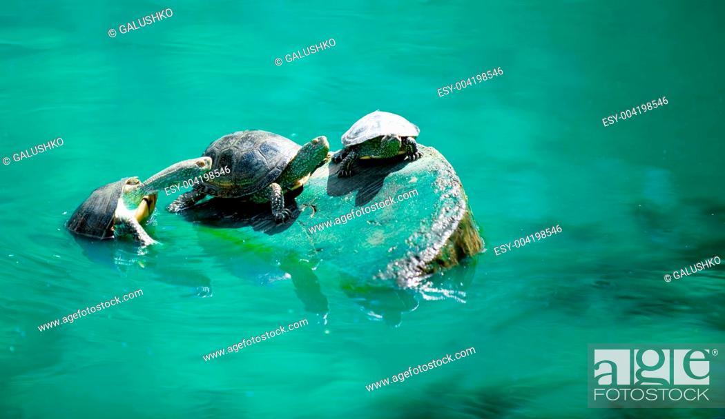 Stock Photo: Turtles.