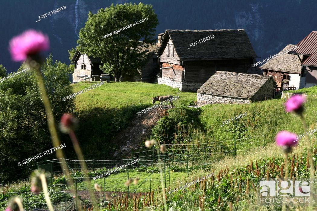 Stock Photo: Sun shining on provincial houses in the Antigorio Valley, Italy.