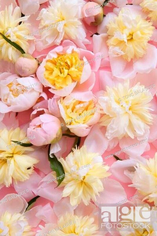 Stock Photo: colorful pink and yellow flowers background.