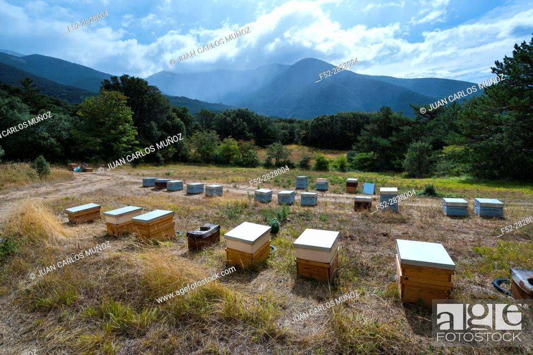 Photo de stock: Pedro Arto Beekeeper, Aragües del Puerto Village, Jacetania, Huesca, Aragon, Spain, Europe.