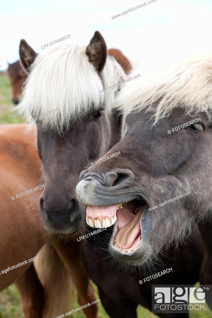 Horse Face Teeth