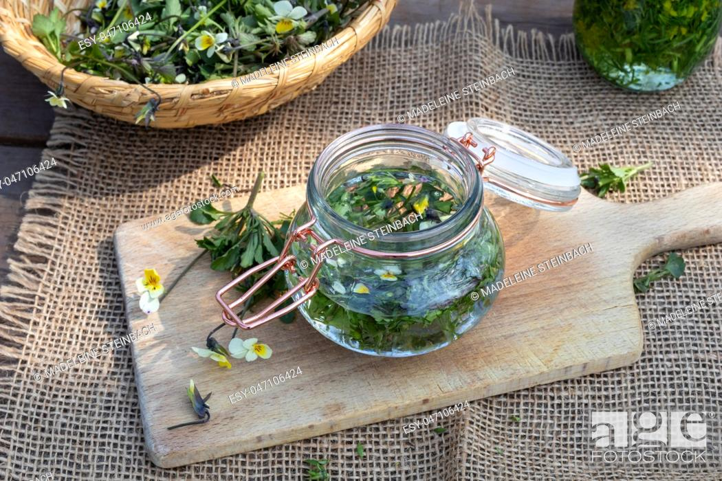 Imagen: Preparation of herbal tincture from field pansy, or Viola arvensis flowers.