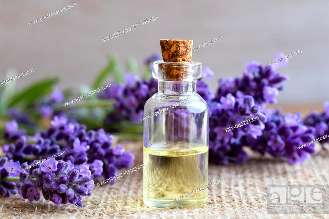 Stock Photo: A bottle of essential oil with fresh blooming lavender twigs.