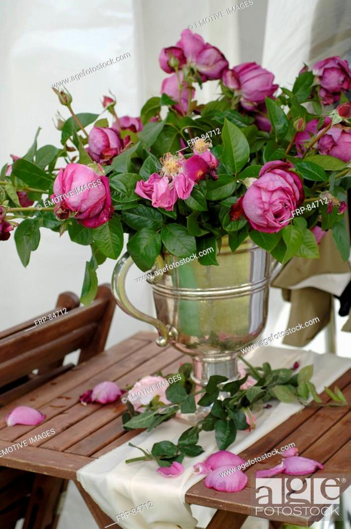 Stock Photo: Bush roses.
