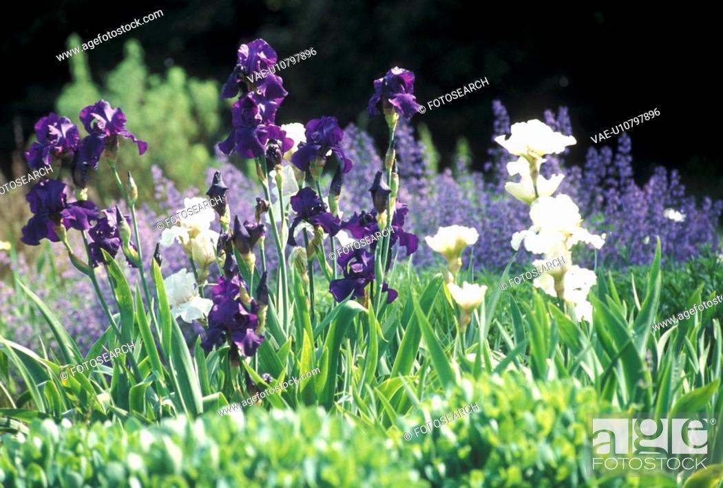 Stock Photo: Bernhard, cow, day, garden, green, guards.