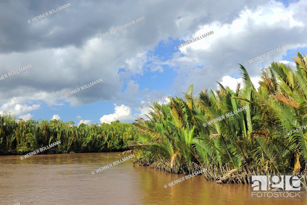 Stock Photo: Sekonyer River with Nipa Palms Nypa fruticans, Province Kalimantan, Borneo, Indonesia.