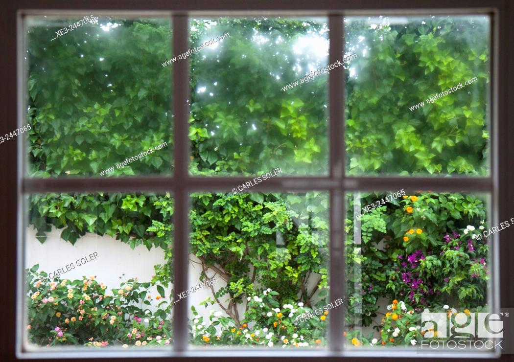 Imagen: View of garden through window.