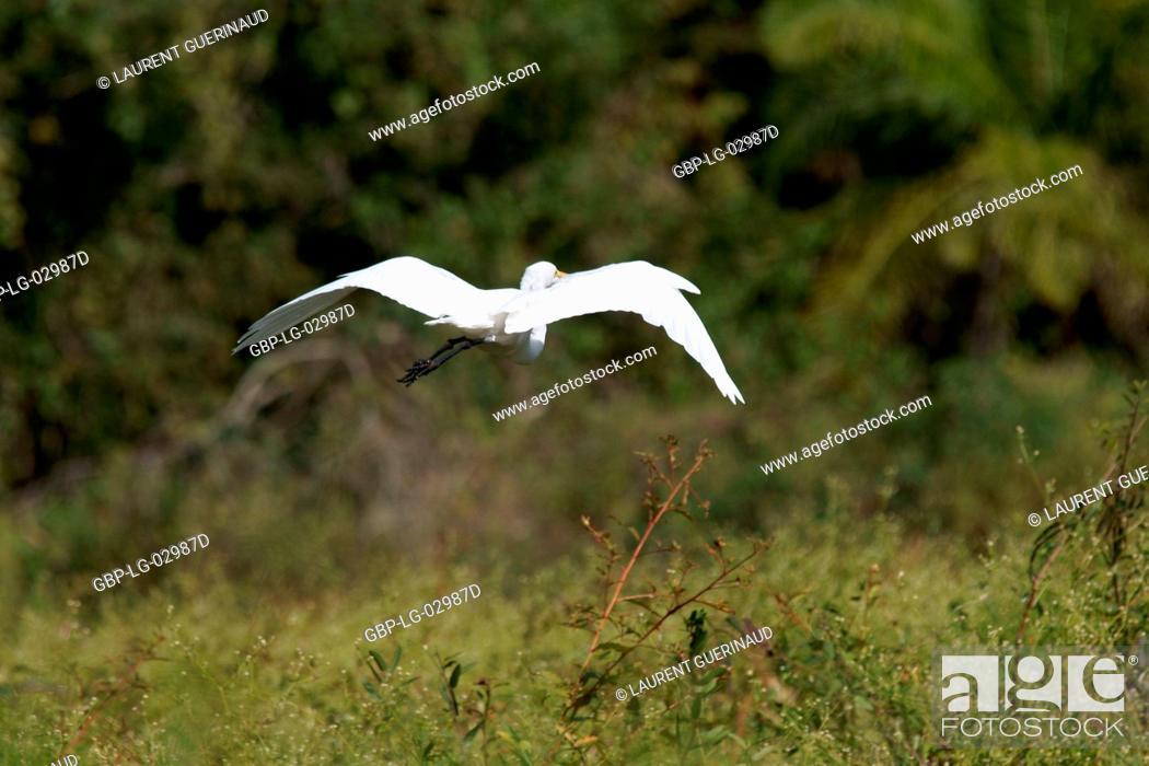 Imagen: Heron, Ave, Pantanal, Mato Grosso do Sul, Brazil.