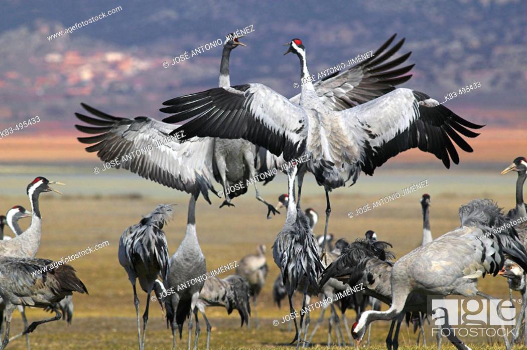 Stock Photo: Cranes flying. Spain.