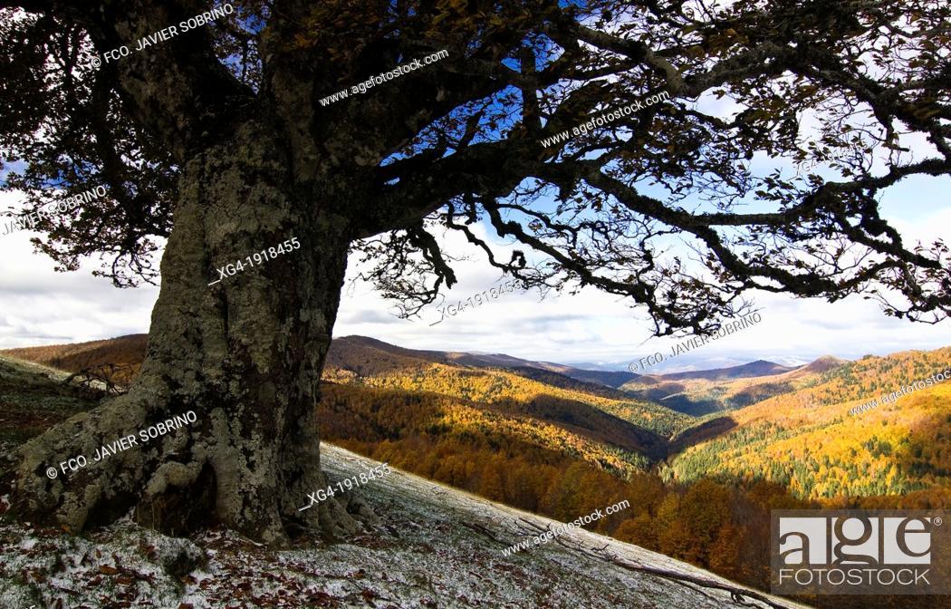 Stock Photo: Irati forest in autumn from the Ollokia hill - Navarre Pyrenees - Navarra - Spain - Europe.