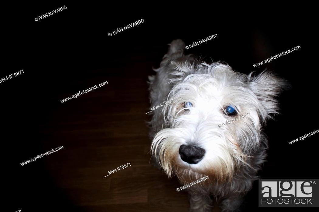 Stock Photo: Dog looking at camera.