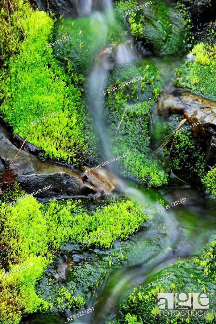 Stock Photo: Moss beds lining streambed. Ontario. Canada.
