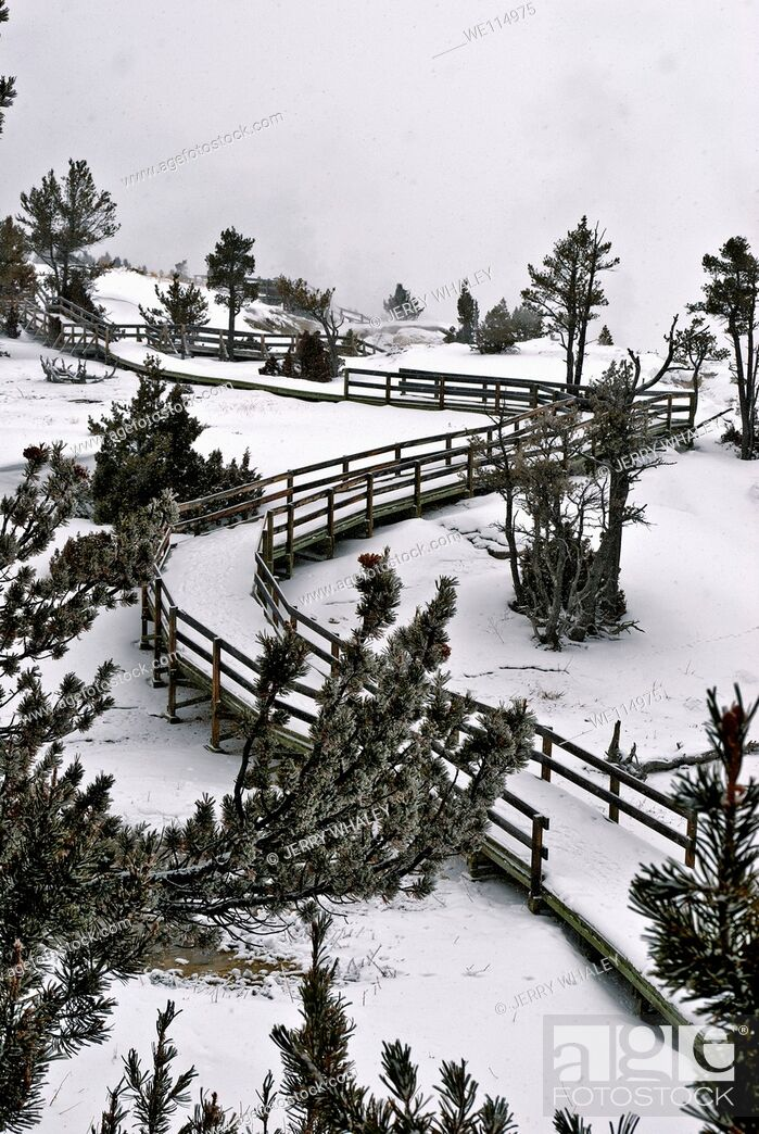 Stock Photo: Winter, Boardwalk, Mammoth Hot Springs, Yellowstone NP.