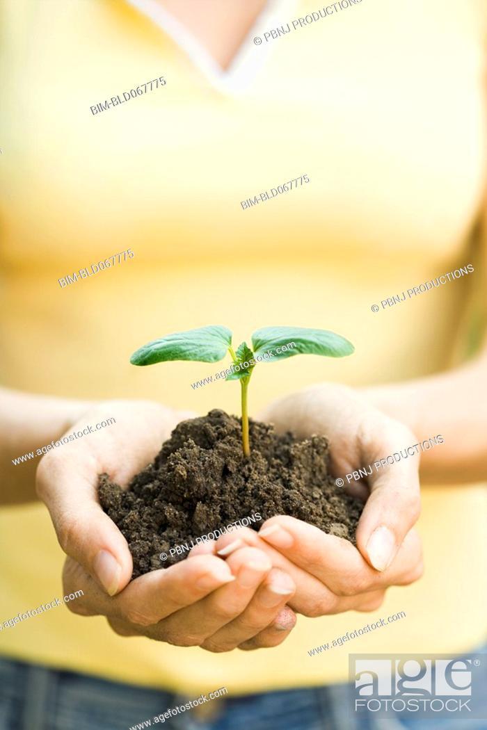 Stock Photo: Hispanic woman holding seedling.