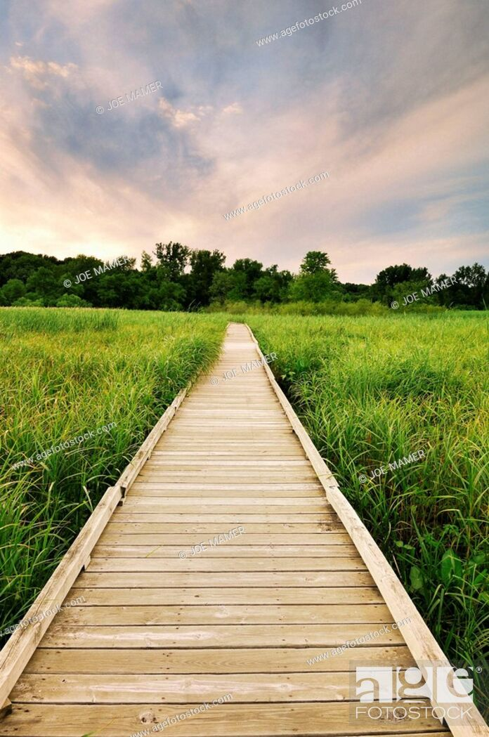 Stock Photo: A boardwalk leads into a low area of the Minnesota River Valley in the Minnesota Valley National Wildlife Refuge.