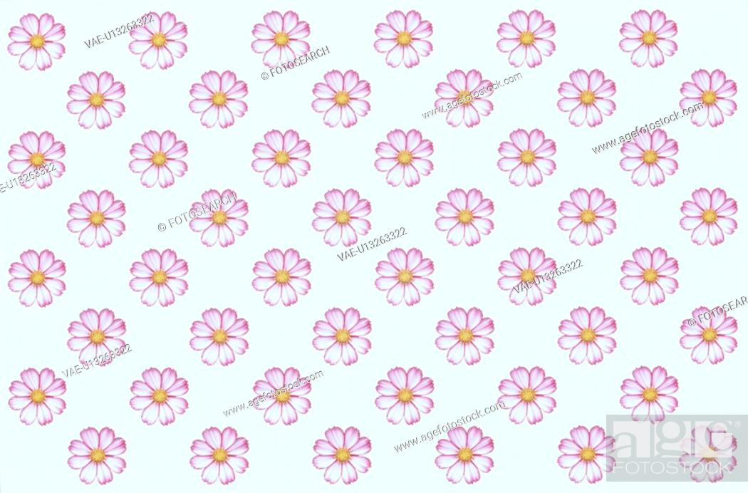 Stock Photo: The Sheet Of Pink Cosmos.