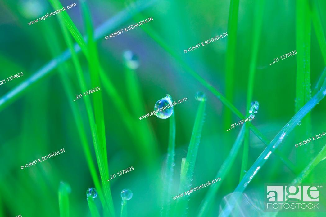 Stock Photo: Dew drops glittering on a blades of grass.
