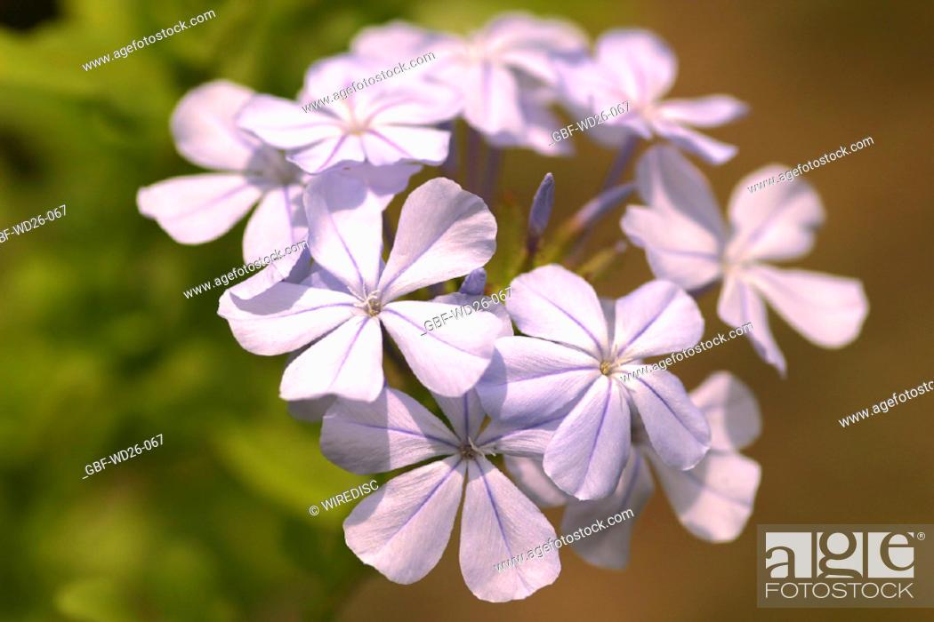 Stock Photo: Flowers, nature.