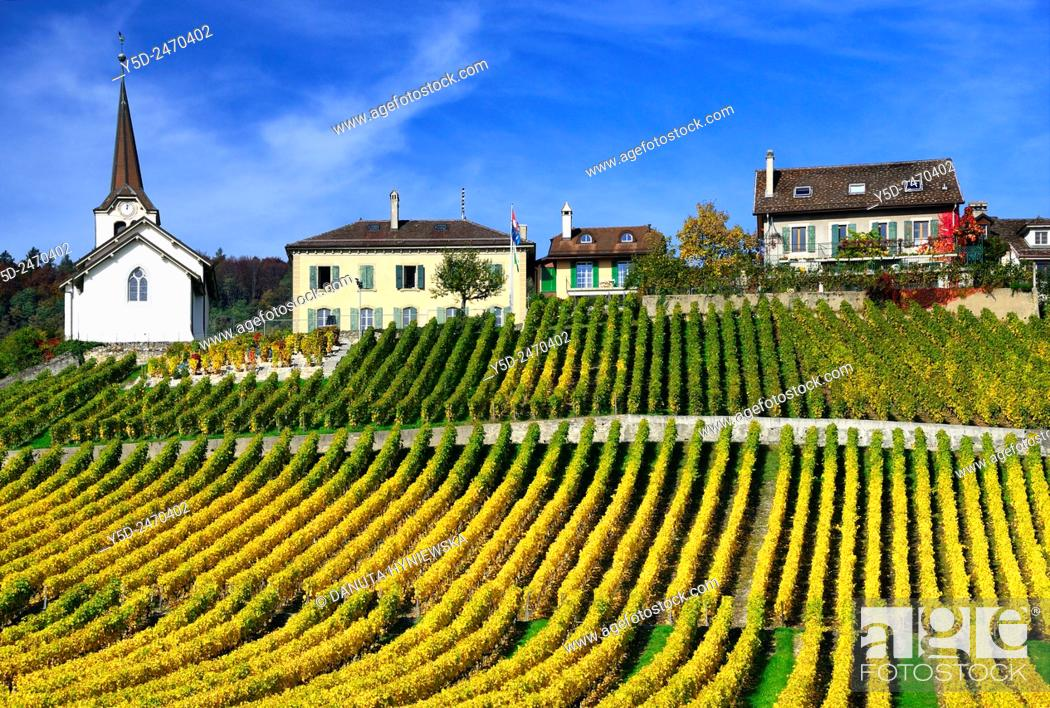 Stock Photo: Europe, Switzerland, Canton Vaud, La Côte, Morges district, Féchy, vineyards in early autumn.