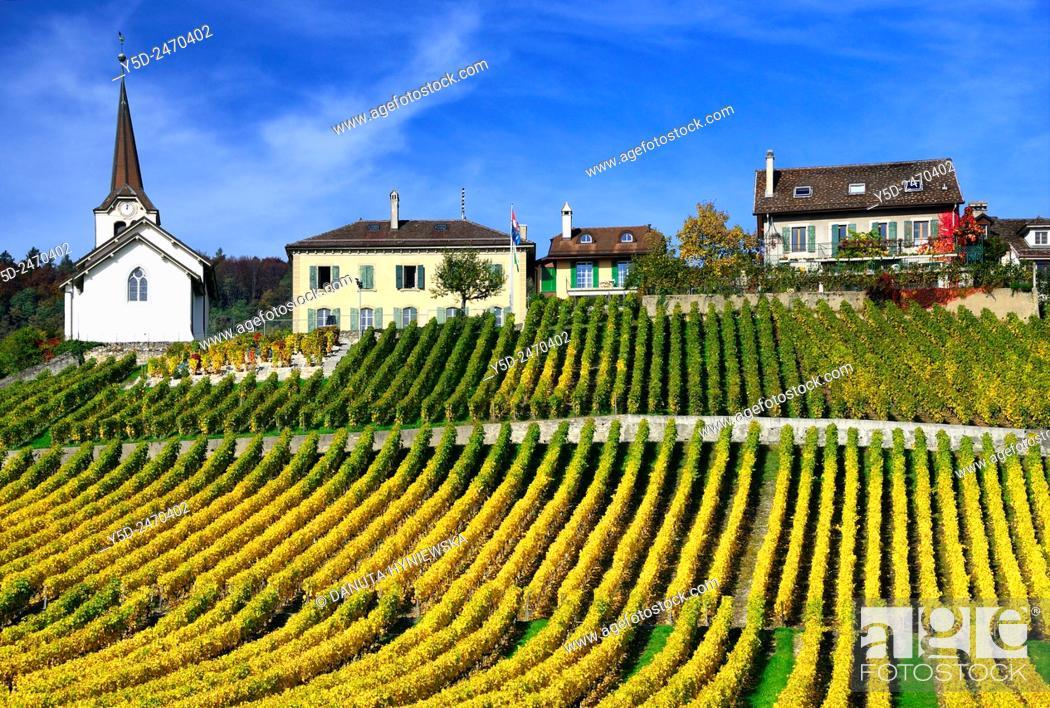 Imagen: Europe, Switzerland, Canton Vaud, La Côte, Morges district, Féchy, vineyards in early autumn.