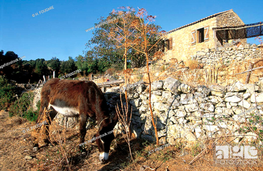 Stock Photo: France, Corsica, Sagone, donkey and Corsican shelter.