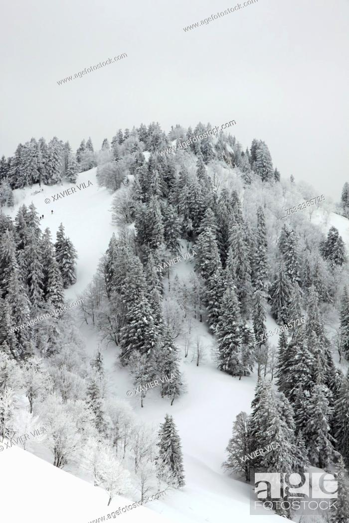 """Stock Photo: The mountainous of """"""""La Grande Chartreuse"""""""" received the National Forest Exception label. After Fontainebleau and Verdun is the third site to receive this award."""