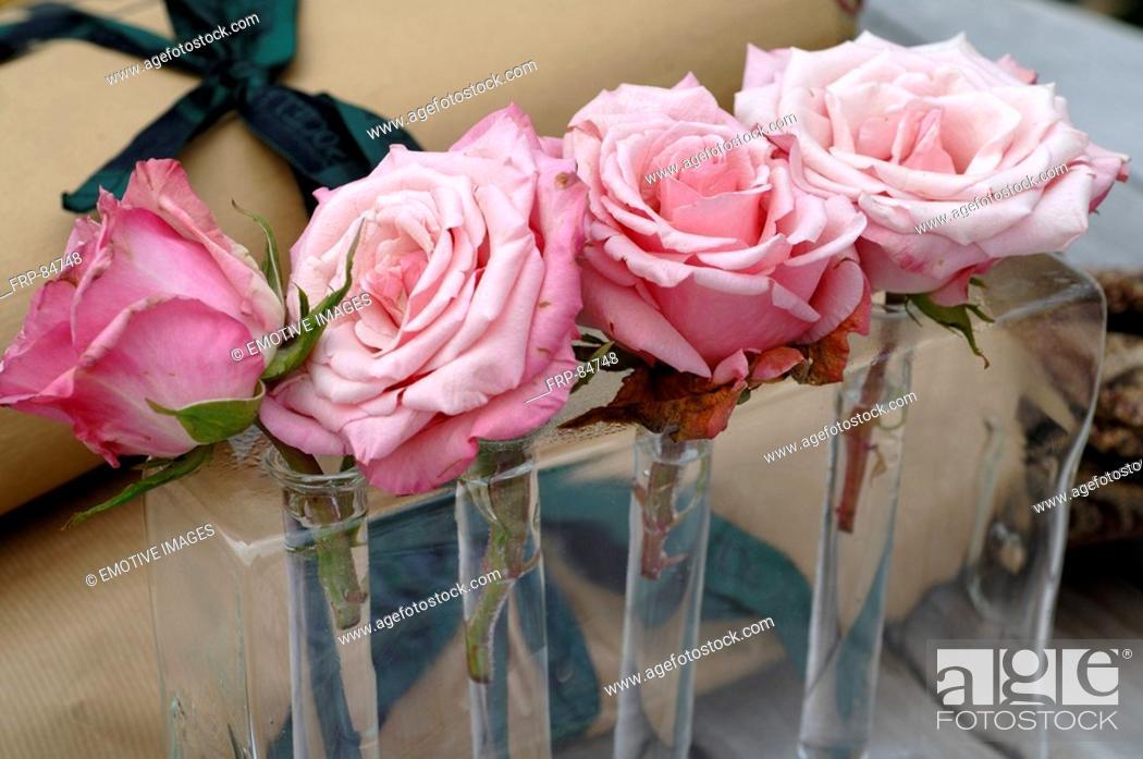 Stock Photo: Arrangement of roses.