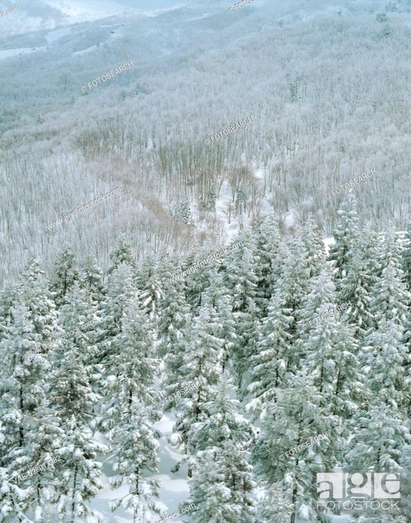 Stock Photo: winter, landscape, snowscape, snow, mountain, forest, nature.