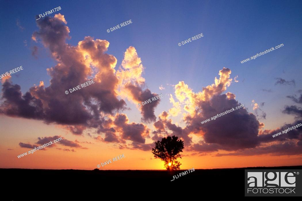 Imagen: Tree and Cumulonimbus Clouds at Sunset, near St. Agathe, Manitoba.